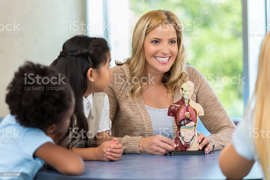 Teacher showing elementary students model of the human anatomy stock photo