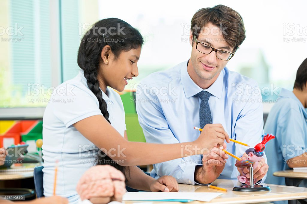 Teacher using heart model to show to student stock photo