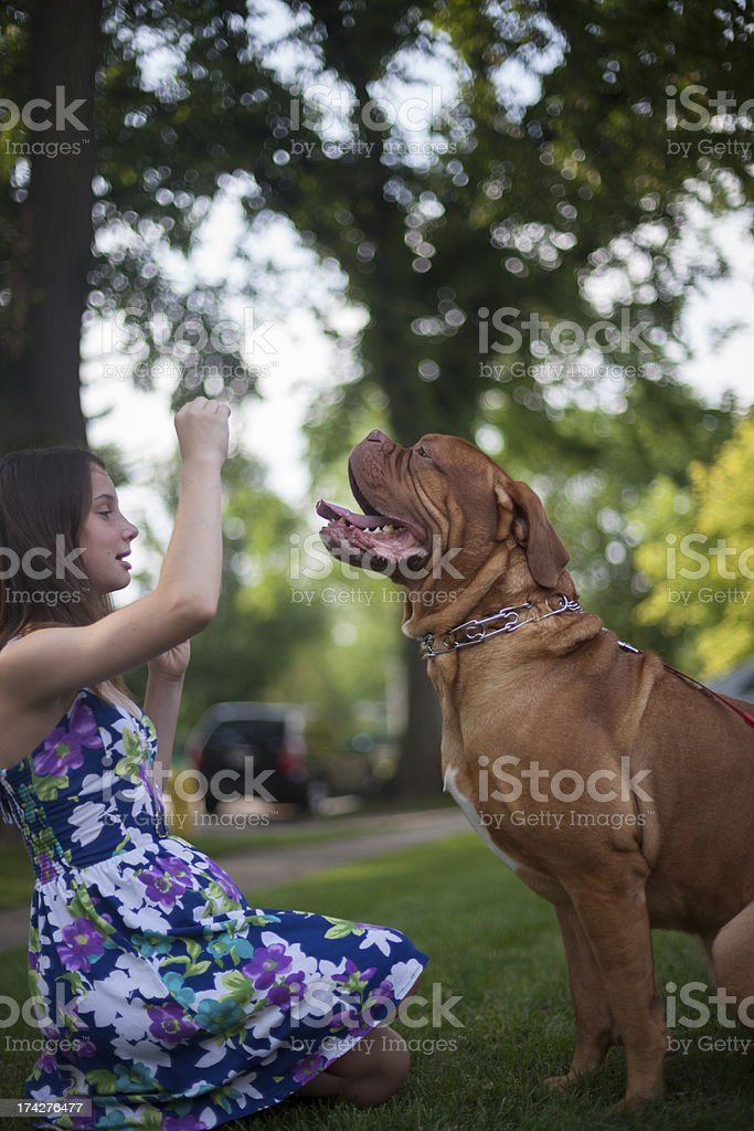 Teaching an Old Dog New Tricks stock photo