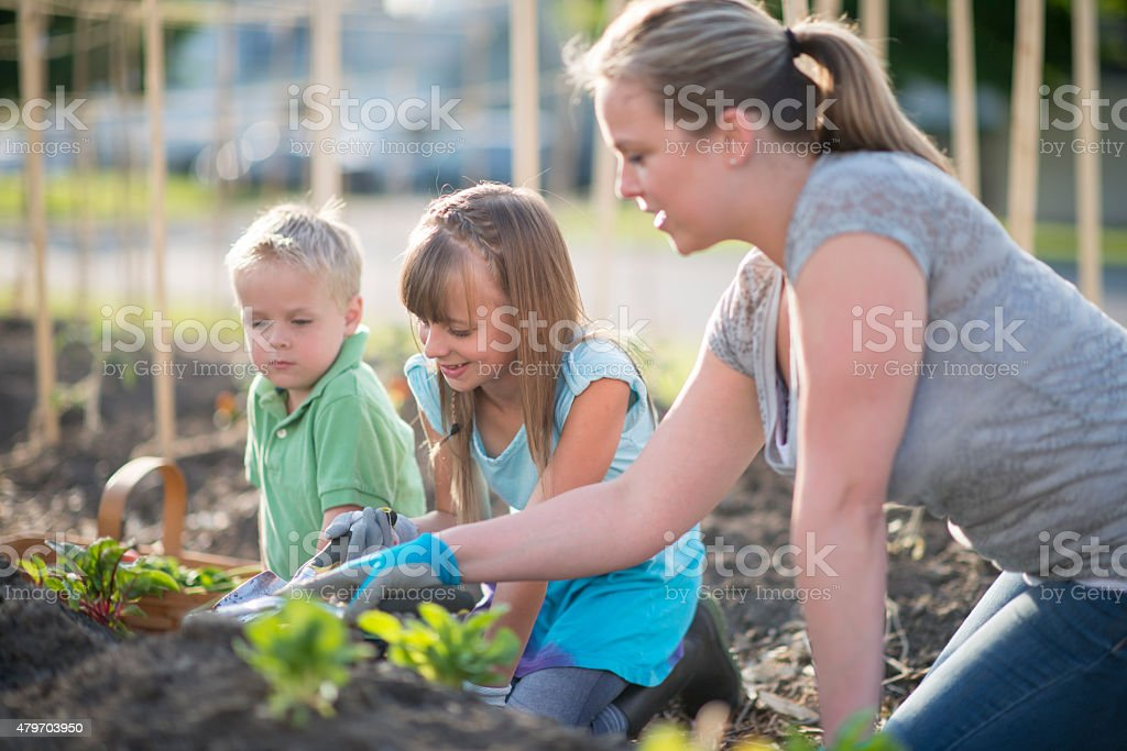 Teaching Children to Garden stock photo