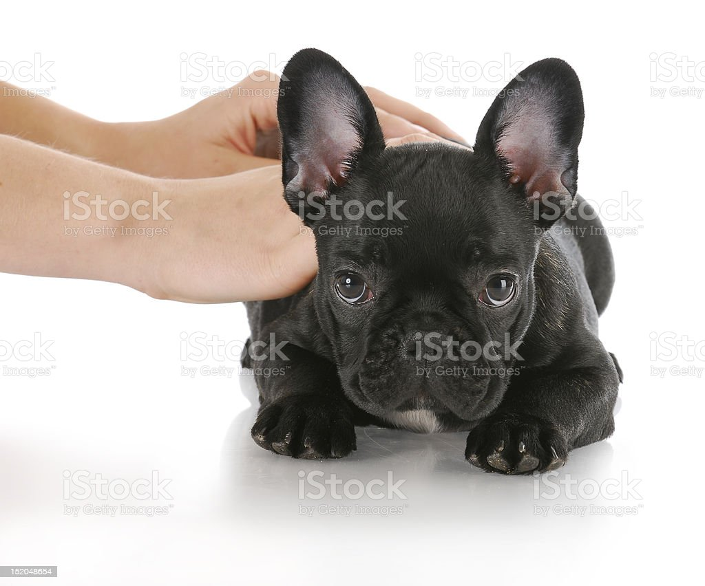 teaching dog down royalty-free stock photo