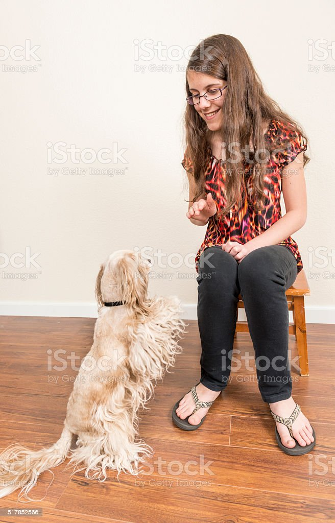Teaching dog new tricks stock photo