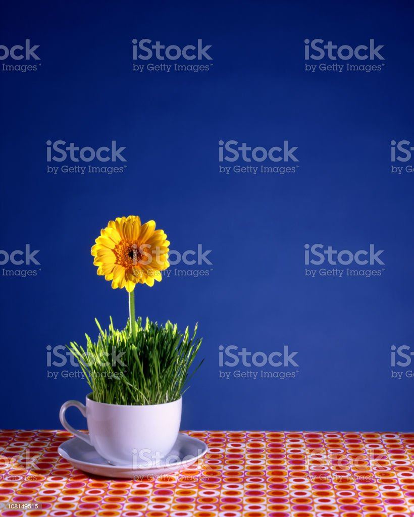 Teacup with Daisy Inside royalty-free stock photo