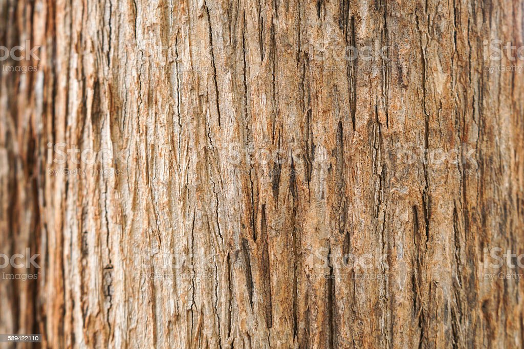 teak tree bark texture stock photo