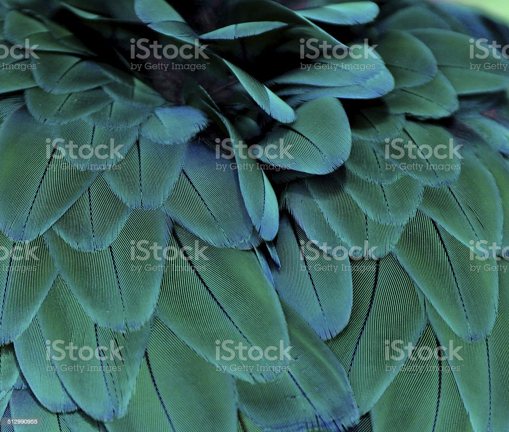 Teal Feathers stock photo