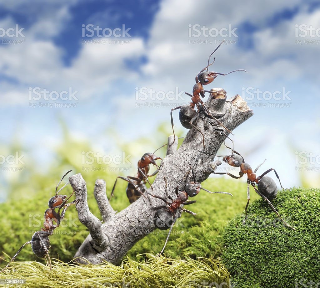 team of ants and tree, teamwork concept stock photo