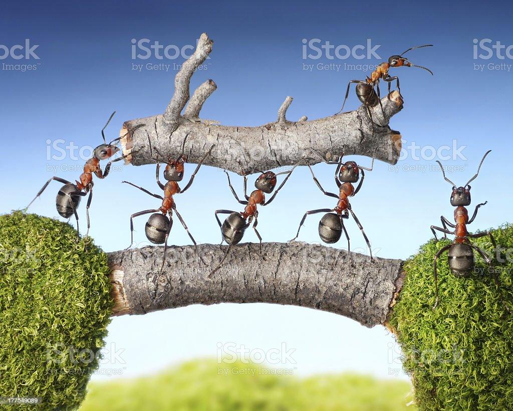 team of ants carry log on bridge, teamwork stock photo