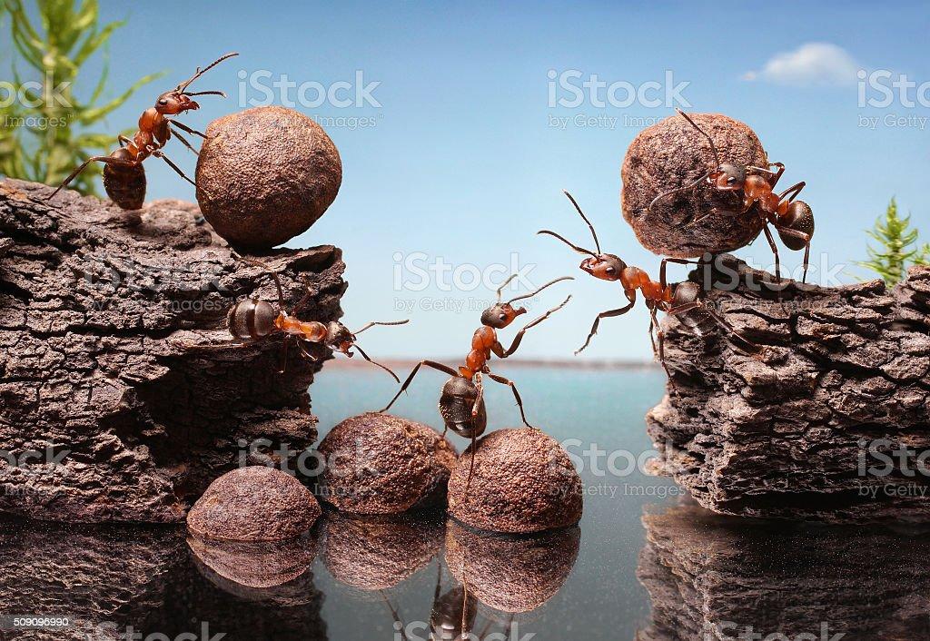 team of ants construct dam, teamwork stock photo