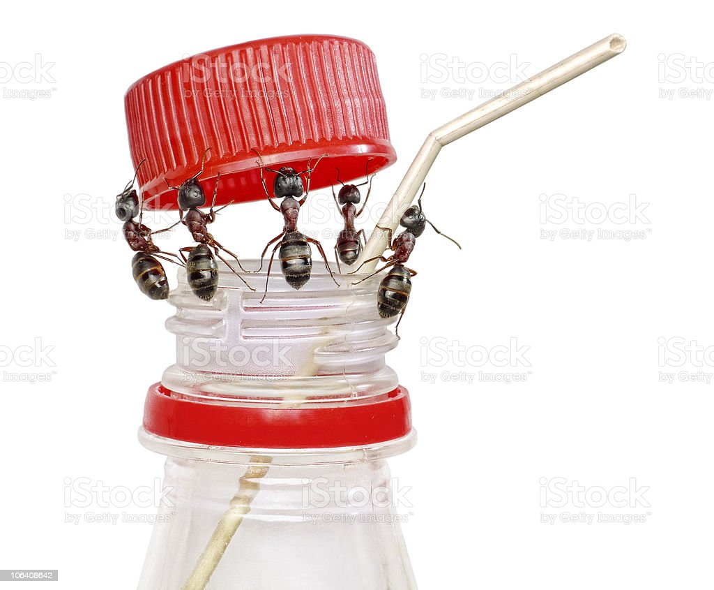 team of ants opening bottle royalty-free stock photo