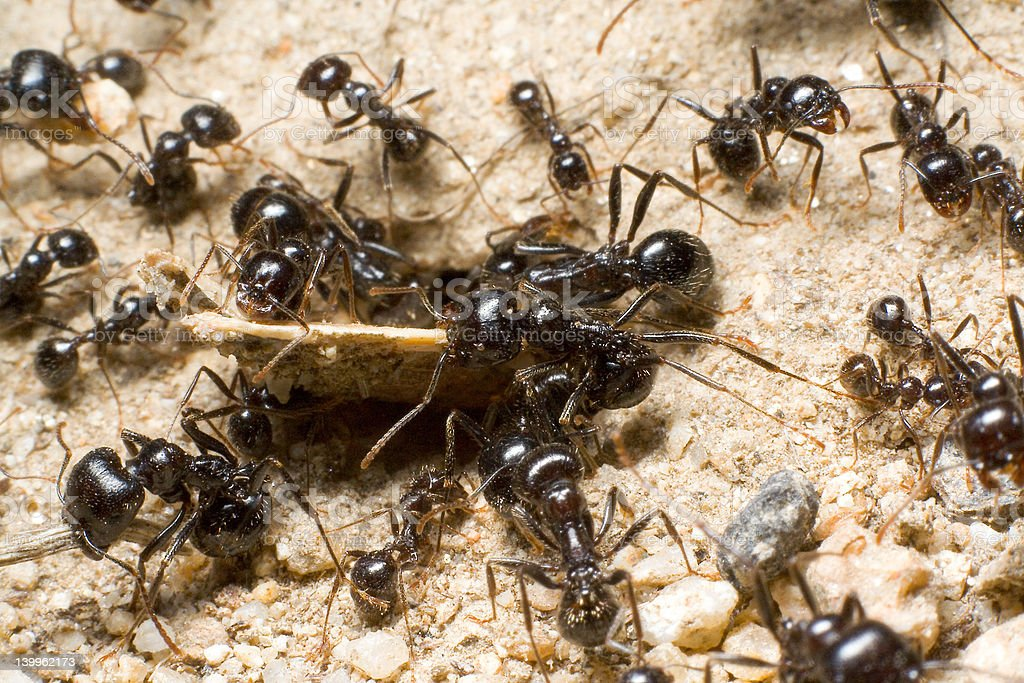 Team of ants stock photo