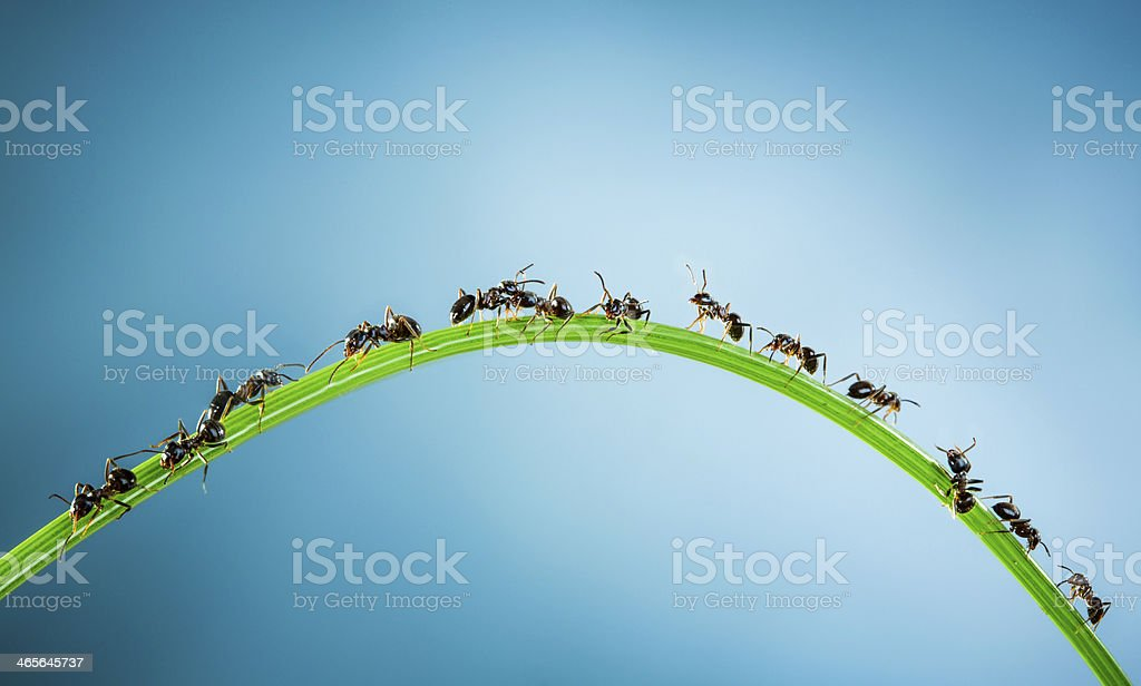 Team of ants. stock photo
