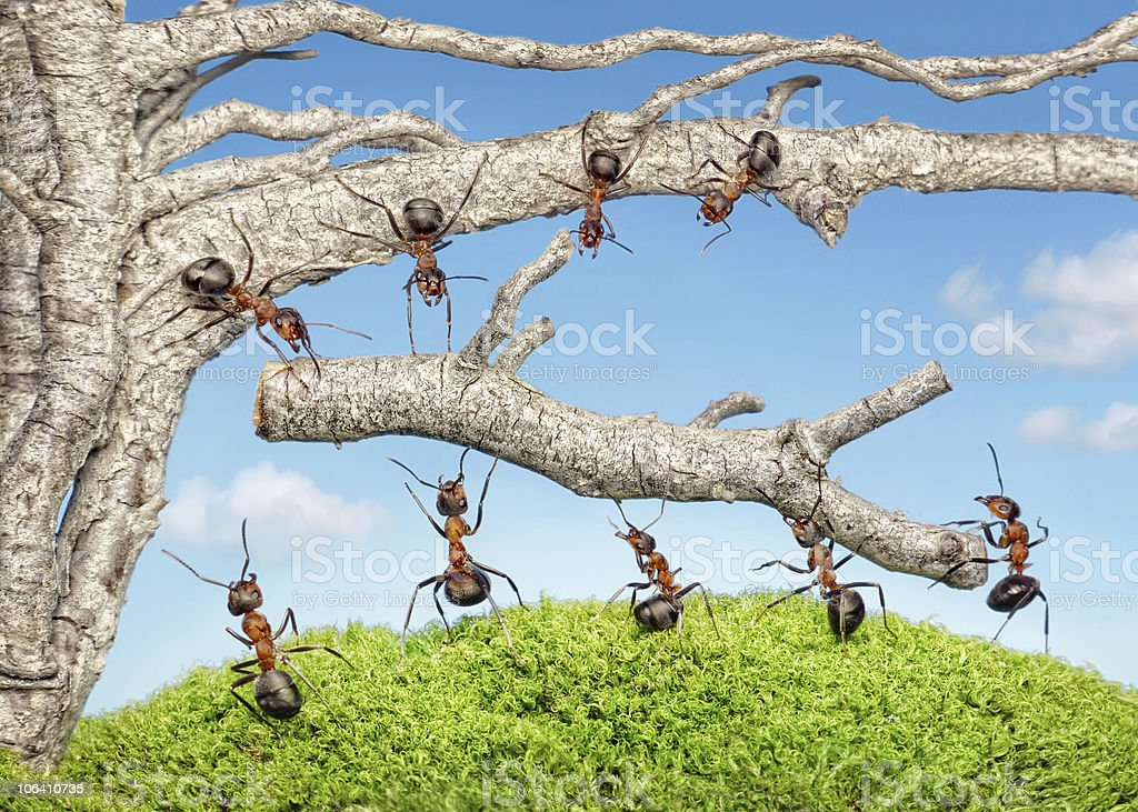 team of ants taking branch from tree stock photo