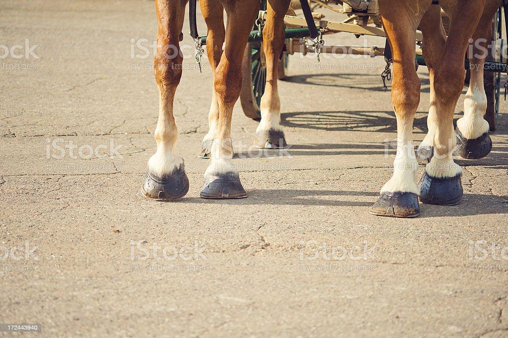 Team of Draft Horses Feet stock photo