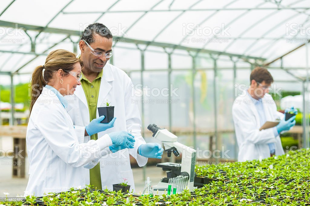 Team of scientists studying plants at a greenhouse stock photo