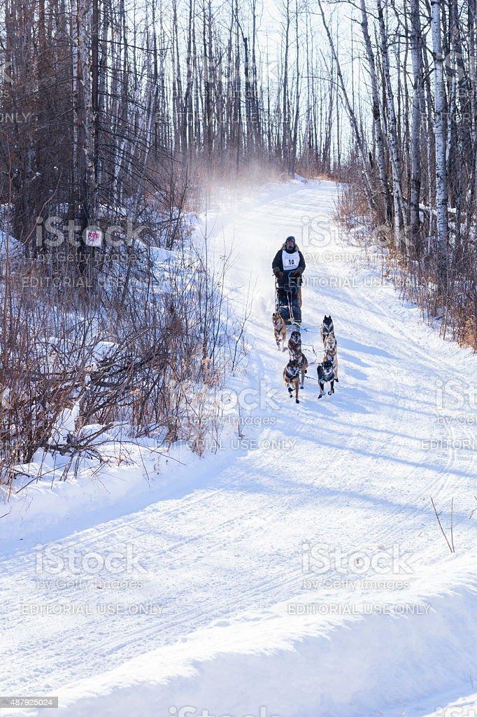 Teamwork dog sledding race in Minnesota stock photo
