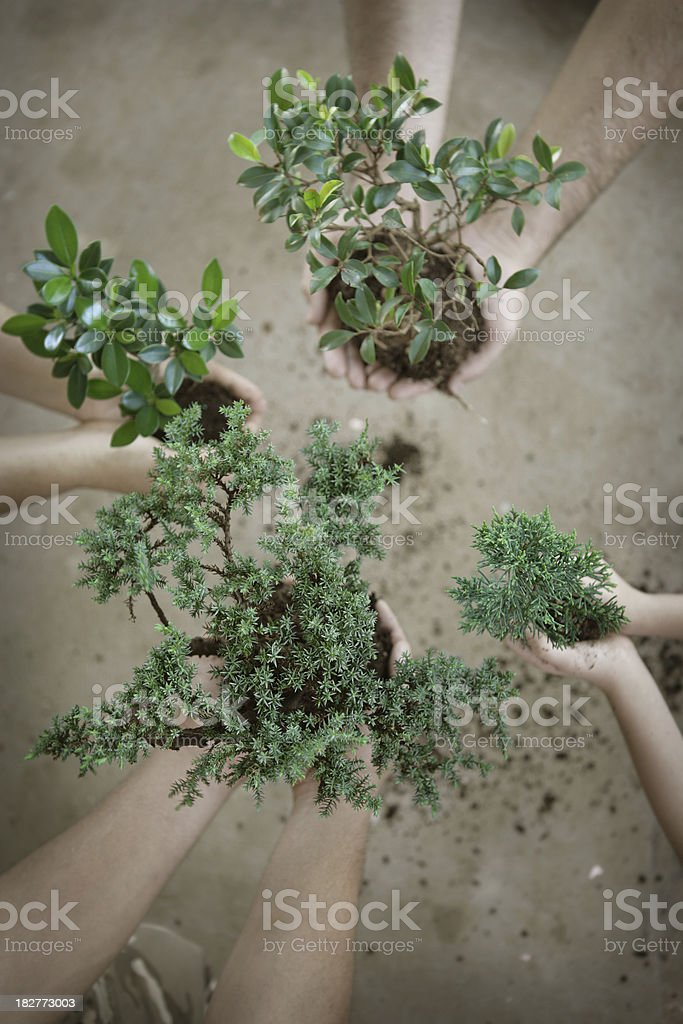 Teamwork Growth royalty-free stock photo