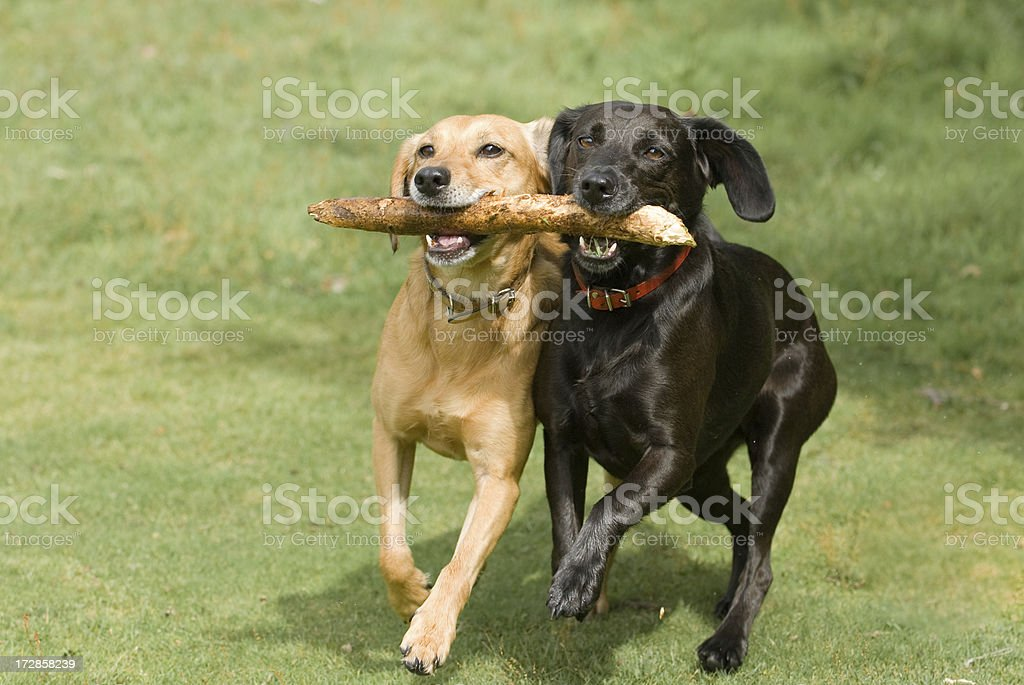 teamwork! stock photo