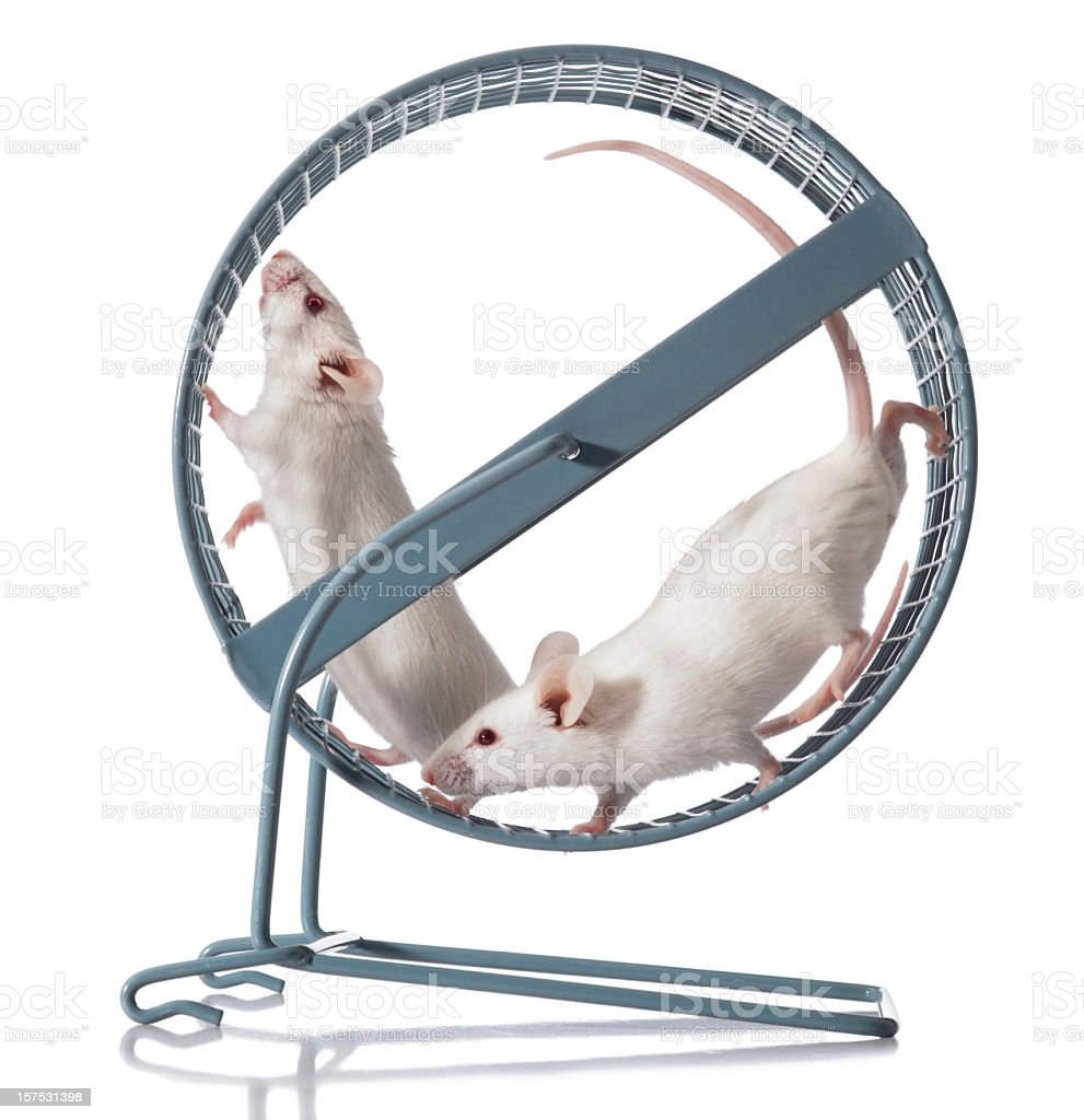 Teamwork; Two White Mice Team Exercising in Running Wheel stock photo