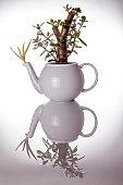 Teapot used as an unusual ornamental plant pot