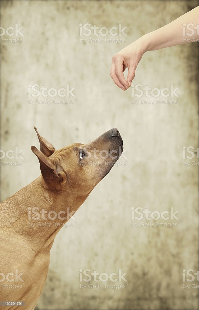 Tease a dog royalty-free stock photo
