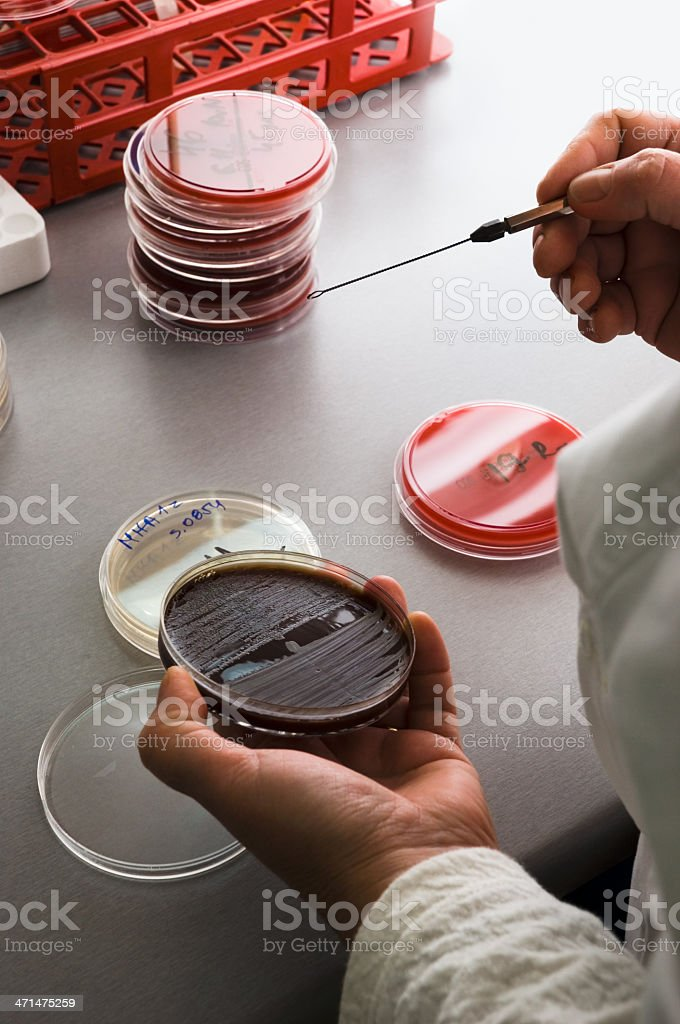 Technician working in laboratory royalty-free stock photo
