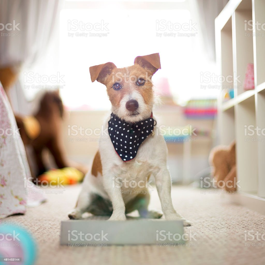 Techno Dog stock photo