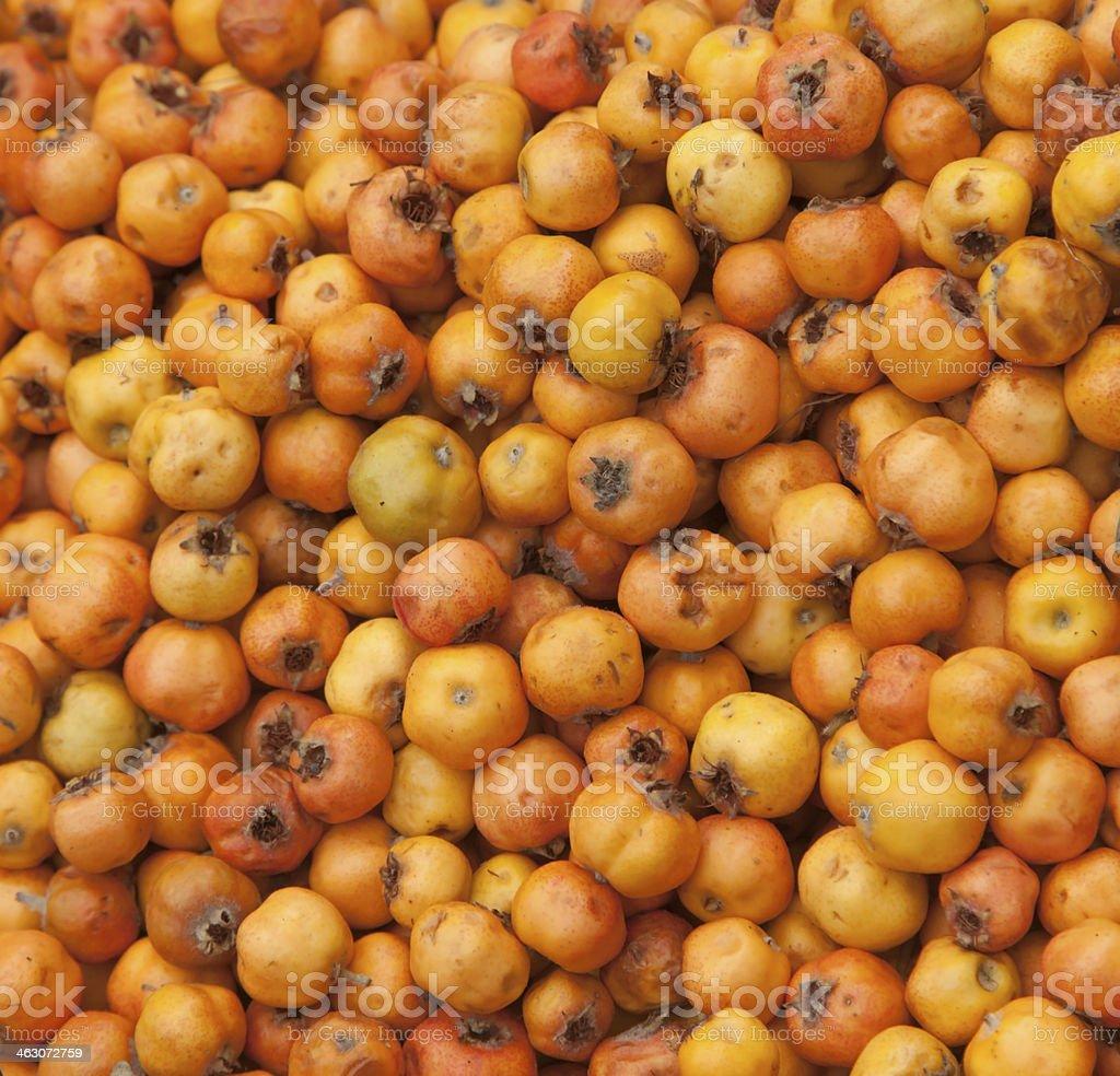 Tecojote winter tropical fruit stock photo