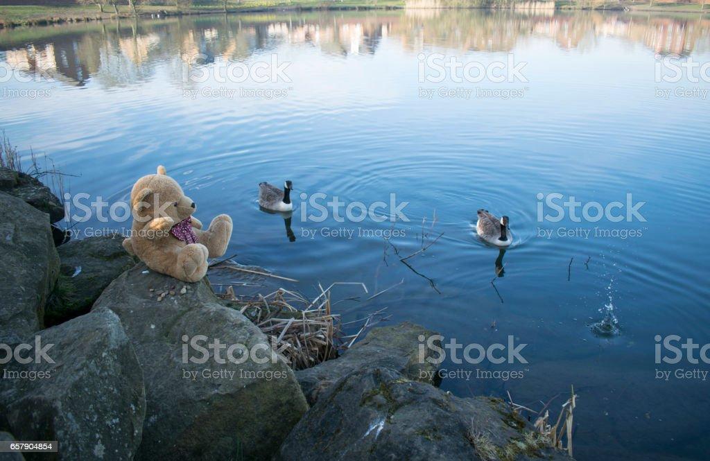 Teddy Bear At Lake stock photo
