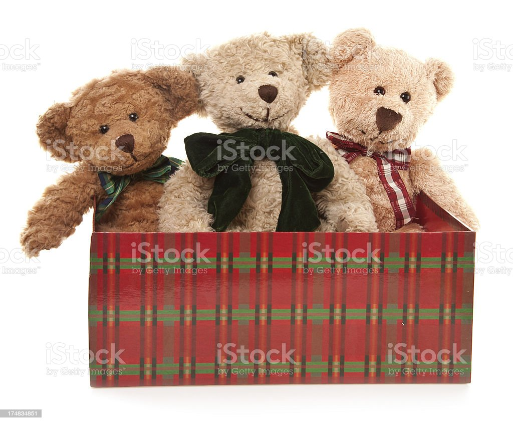 Teddy Bear Bunch in Shoe Box royalty-free stock photo