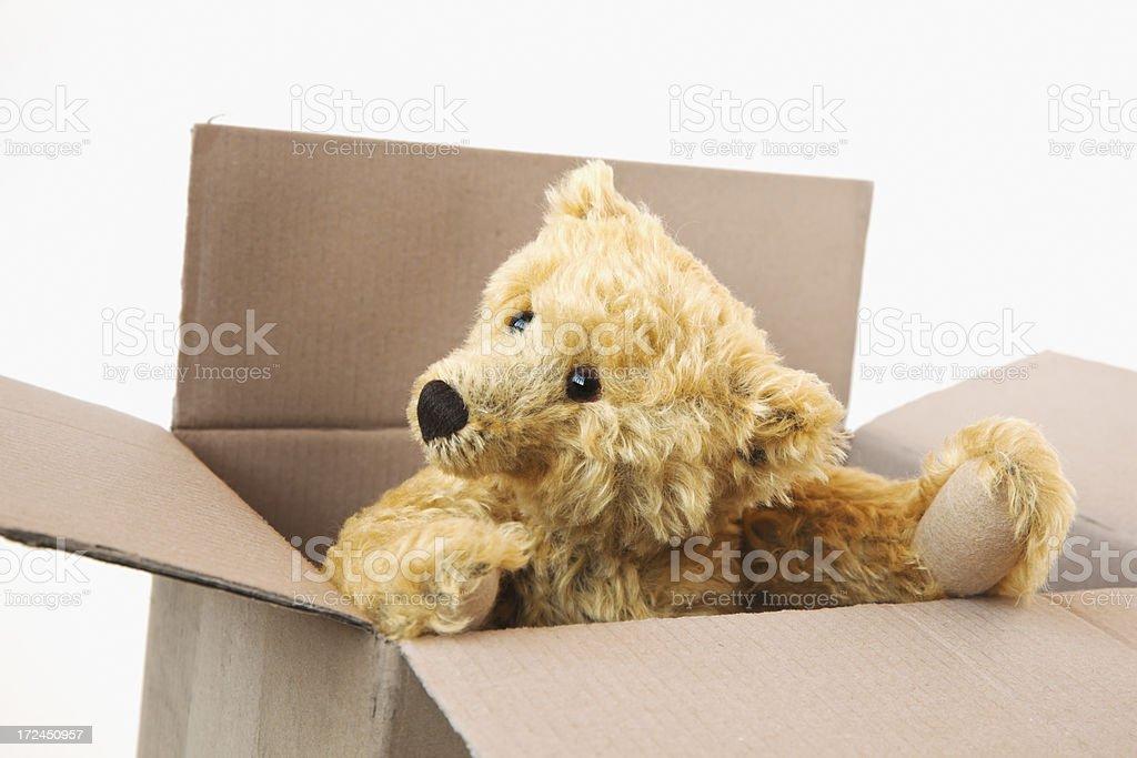 Teddy bear inside a cardboard box looking around. stock photo