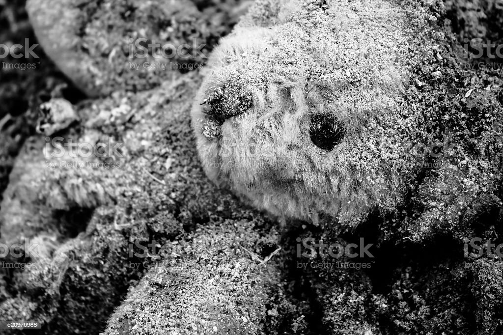 Teddy bear who lies in a pile of ash stock photo