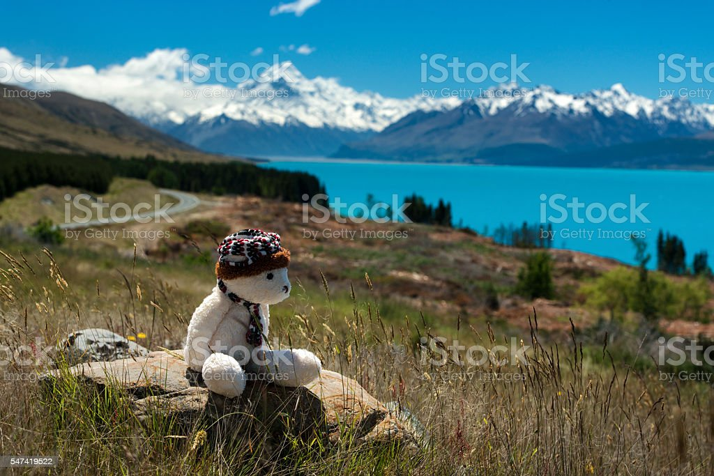 Teddy Bear with views of New Zealand stock photo