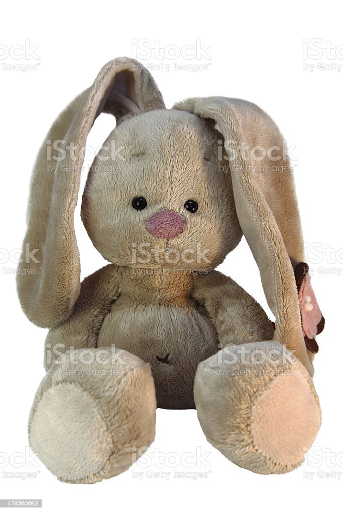 teddy bunny stock photo
