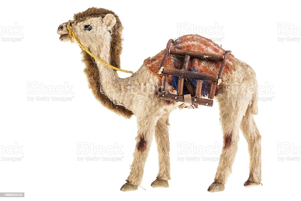 Teddy dromedary royalty-free stock photo