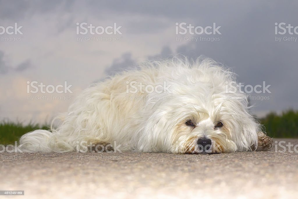 Tedious stock photo