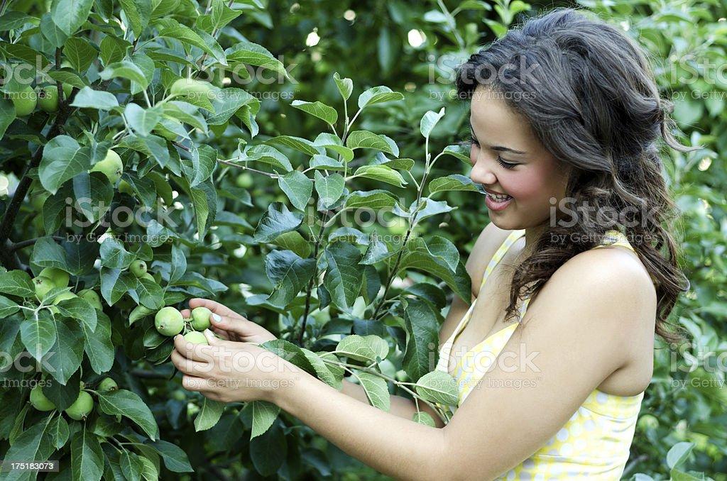 Teen girl examining baby apples royalty-free stock photo