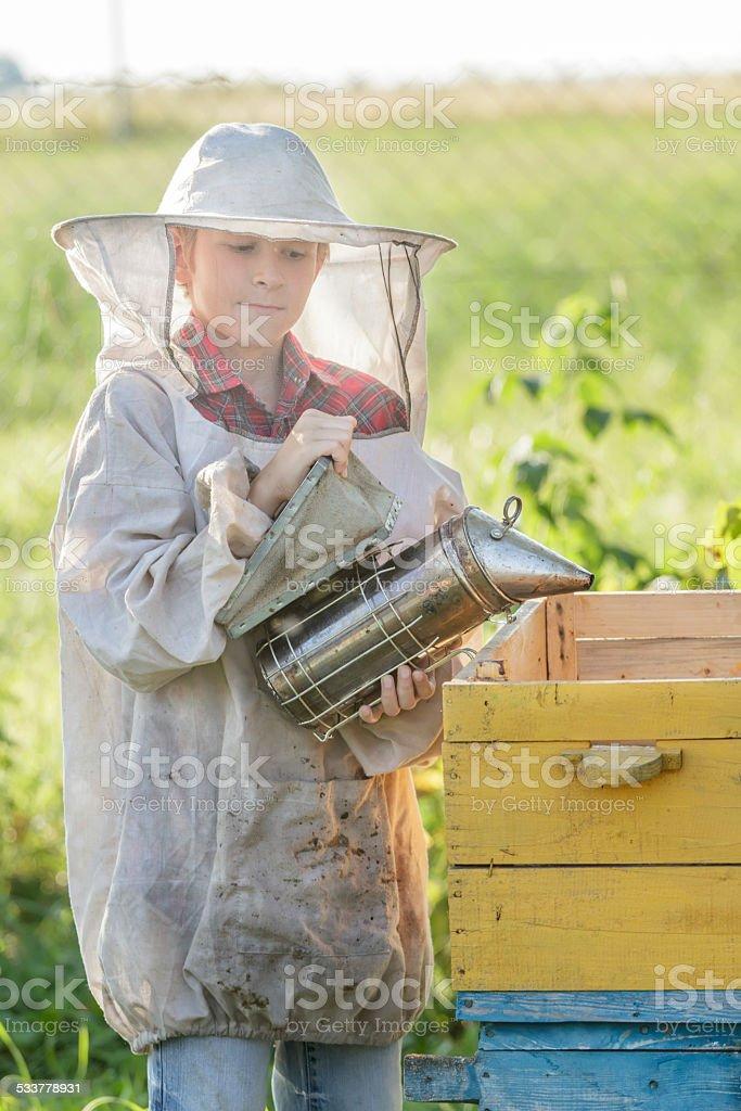 Teenage beekeeper and seasonal honey harvesting stock photo
