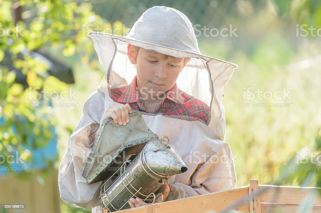 Teenage beekeeper inspecting commercial bee yard stock photo