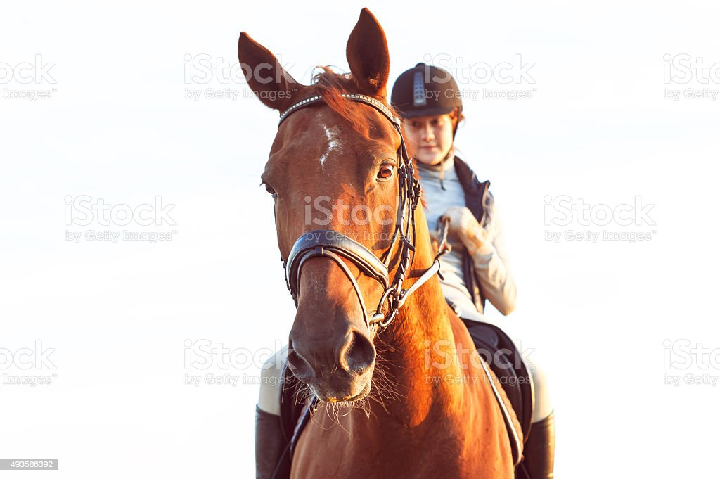 Teenage girl equestrian riding horseback. Vibrant summertime outdoors image. stock photo
