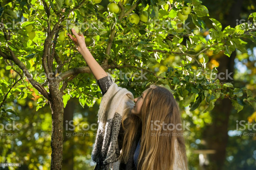 Teenage girl picking apple from tree stock photo