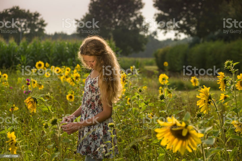 Teenage girl standing in a field of sunflowers stock photo