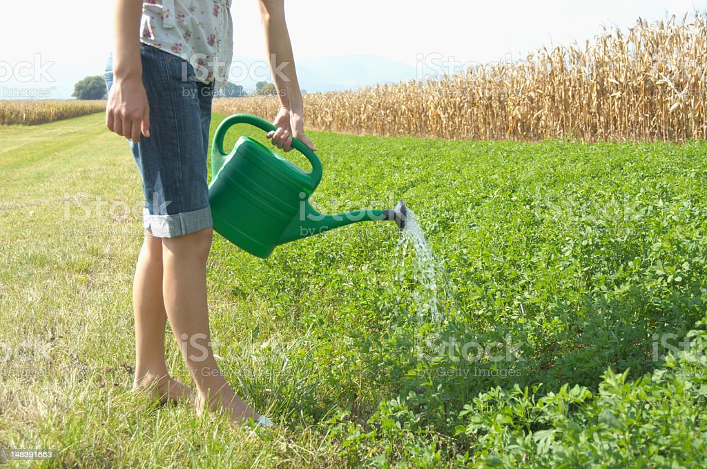 Teenage girl (16-18) watering plants with watering can, low sect stock photo