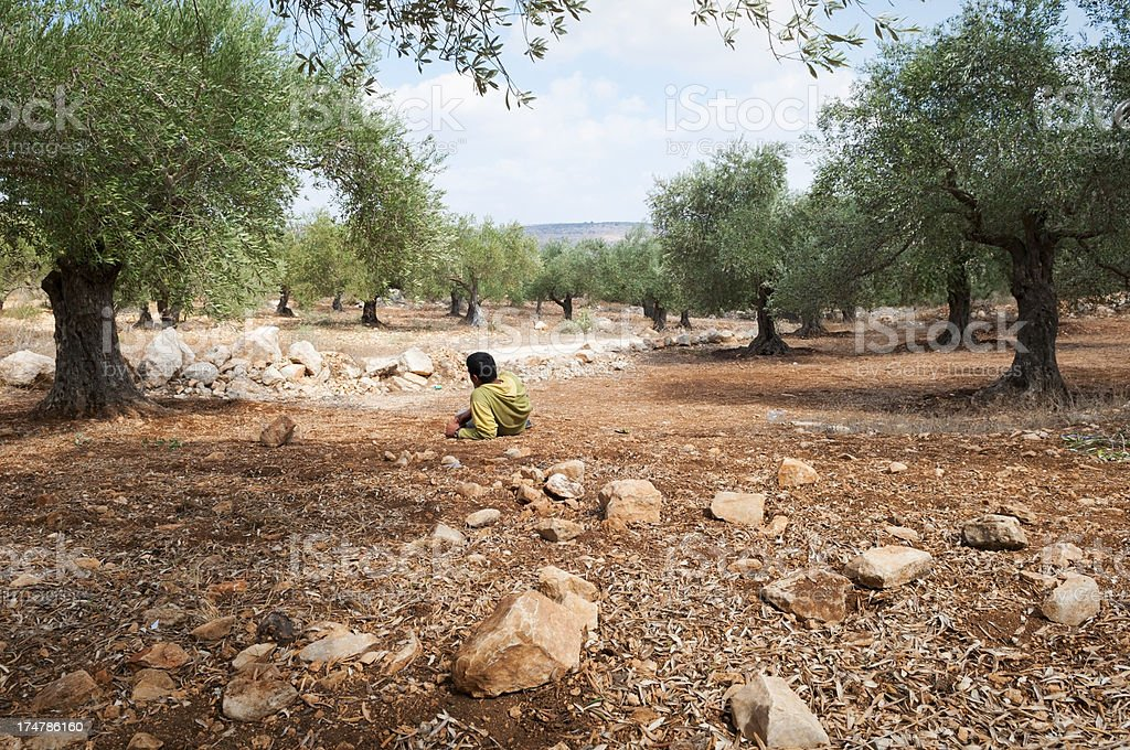 Teenage Palestinian boy resting in West Bank olive field royalty-free stock photo
