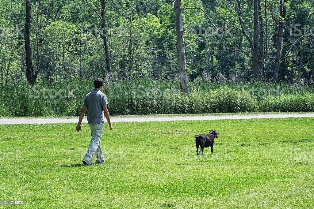 Teenaged Young Man Walking Chocolate Labrador Retriever Dog stock photo