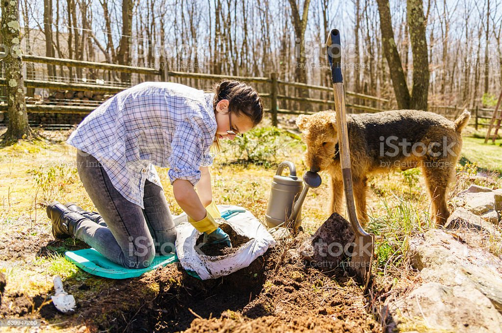Teenager girl and dog gardening on backyard at early spring stock photo
