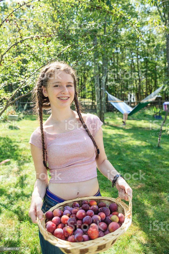 Teenager girl gathers plums and shown the full basket stock photo