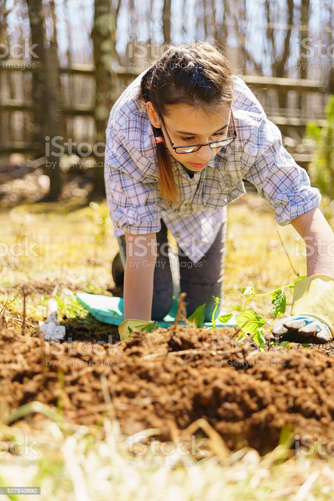 Teenager girl planting flowers on backyard at early spring stock photo