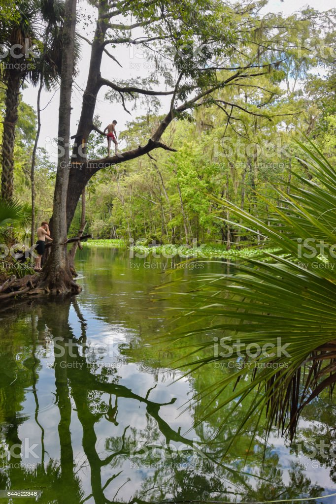 Teenager Jumping from Tree into River stock photo