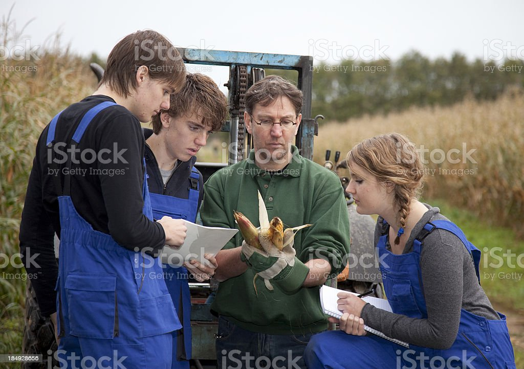 Teenagers learning a occupation. Trainee looking at corn royalty-free stock photo
