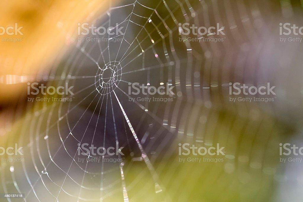 teia de aranha stock photo